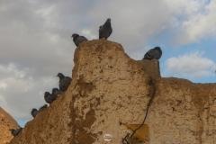 مجموعة طائر حمام, تمنراست, الجزائر