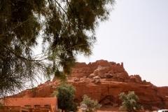 شجرة أتلي, تيميمون, الجزائر